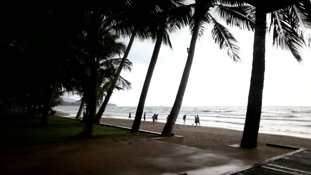 palms on the beach of koh chang island in thailand. - koh chang stock videos and b-roll footage