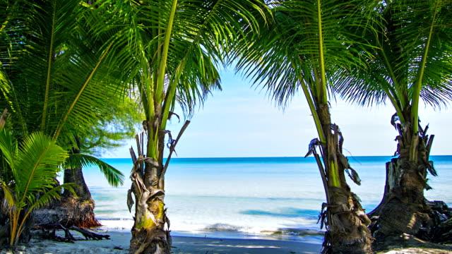 palms on tropical beach - ko samui stock videos and b-roll footage