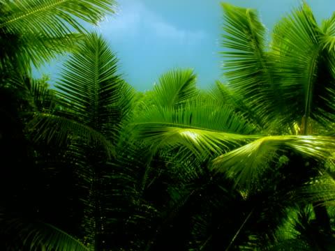 stockvideo's en b-roll-footage met palms pal - bedektzadigen