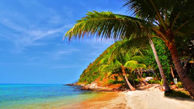 ヤシの木がトロピカルなビーチの近くにある海水 - 熱帯気候点の映像素材/bロール