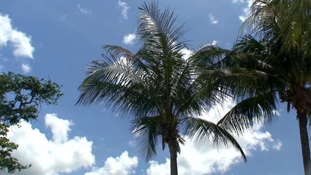 vídeos y material grabado en eventos de stock de palms  - árbol tropical