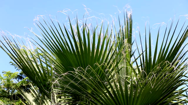 Palms (HD)