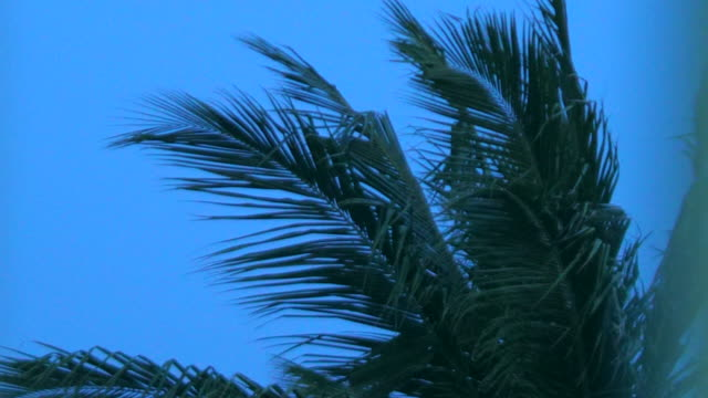 palmtrees in the wind with tropical storm arriving - tropical storm stock videos & royalty-free footage