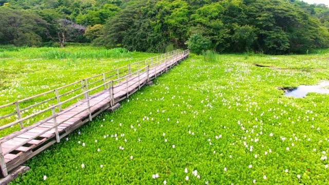 palo verde lagoon and footbridge (wetlands at palo verde national park) - national grassland stock videos & royalty-free footage