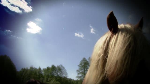 palomino horse - animal colour stock videos & royalty-free footage