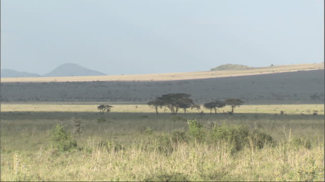 pan across african landscape, kenya, africa - wide stock videos & royalty-free footage