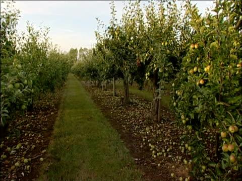 pan across apple orchard kent - 2002 stock-videos und b-roll-filmmaterial