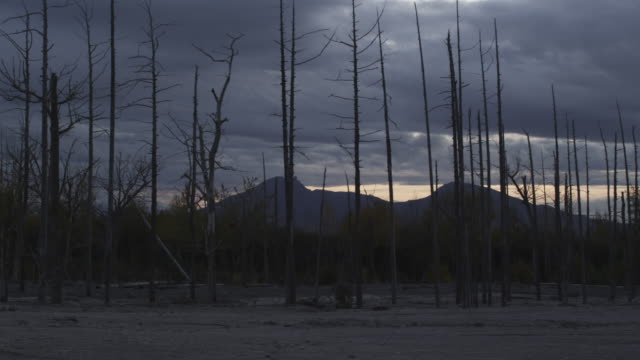 vídeos de stock e filmes b-roll de pan across ash covered ground with trees and shiveluch in background, kamchatka, 2009 - cinza