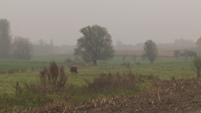 Pan across fields next to a village in foggy weather, northern France.
