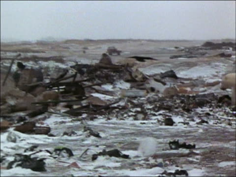 Pan across garbage dump to polar bear (Ursus maritimus) scavenging by burning refuse heap / Churchill, Manitoba, Canada