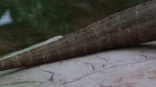 pan across length of komodo dragon - scales stock videos & royalty-free footage
