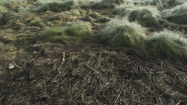pan across misty riverbank and bear's bed, kamchatka, 2009 - paw print stock videos & royalty-free footage