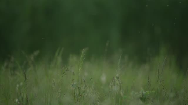 pan across seed heads - pollen grain stock videos & royalty-free footage