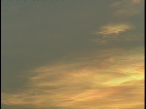 pan across sunset sky, bandhavgarh national park, india - national icon stock videos & royalty-free footage