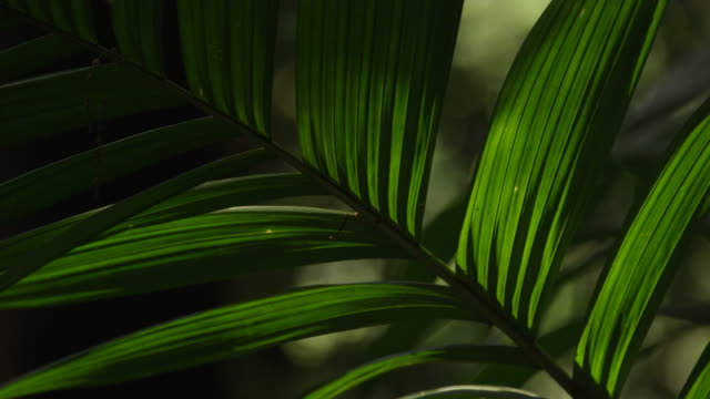 Pan across the leaves of a plant in the El Triunfo biosphere reserve, Mexico.