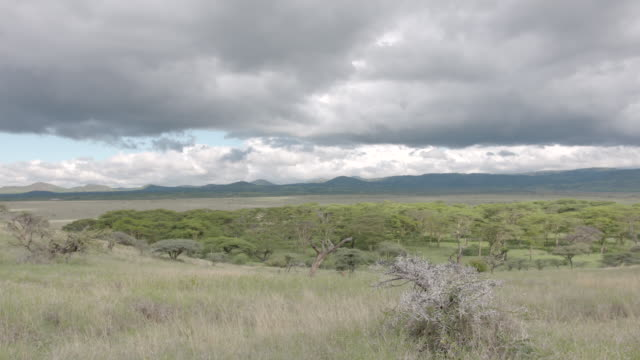 Pan across the Lewa Wildlife Conservancy in Kenya.
