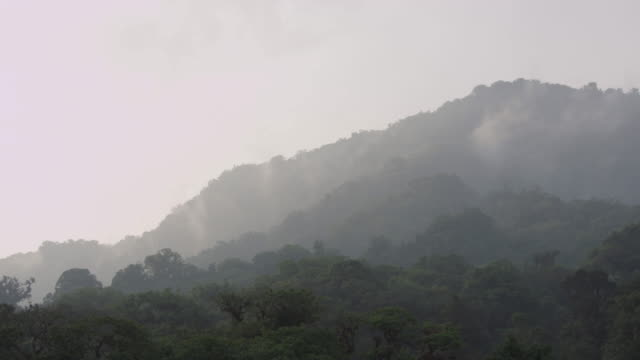 pan across the tree canopy of the el triunfo biosphere reserve in mexico. - copertura di alberi video stock e b–roll