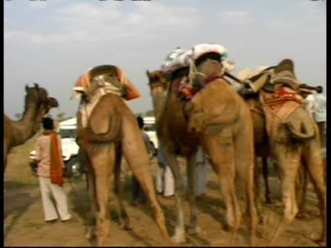 vídeos y material grabado en eventos de stock de ms pan along row of camels and riders in the desert, rajasthan, india - animales de trabajo
