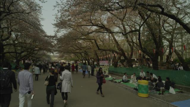 Pan around cherry blossom festival, Tokyo, Japan