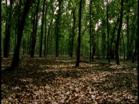 ms pan around jungle, bandhavgarh national park, india - national icon stock videos & royalty-free footage