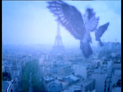 pan around static pigeons in flight over paris - 空気力学点の映像素材/bロール