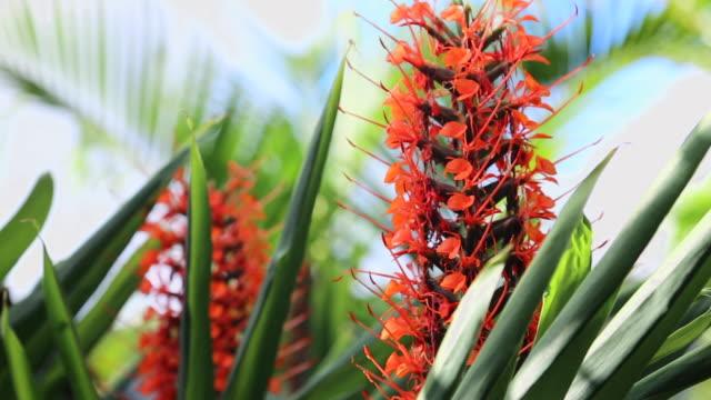 vídeos de stock, filmes e b-roll de pan: beautiful flowers of maresias brazil - pistilo