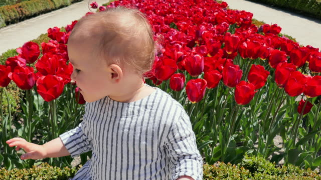 pan: charming baby sitting with flowers in madrid - bouquet stock videos & royalty-free footage
