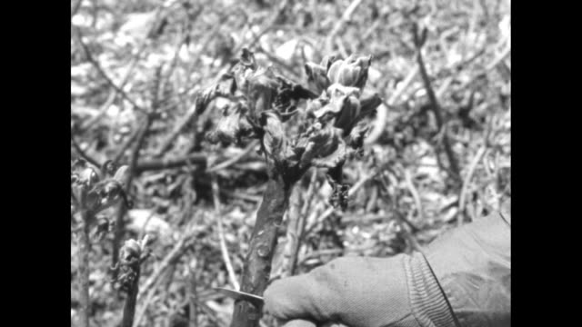 pan decimated burnt plants and ground on eniwetok atoll following hydrogen bomb test during operation sandstone / soldier takes geiger counter... - plant bark stock videos and b-roll footage