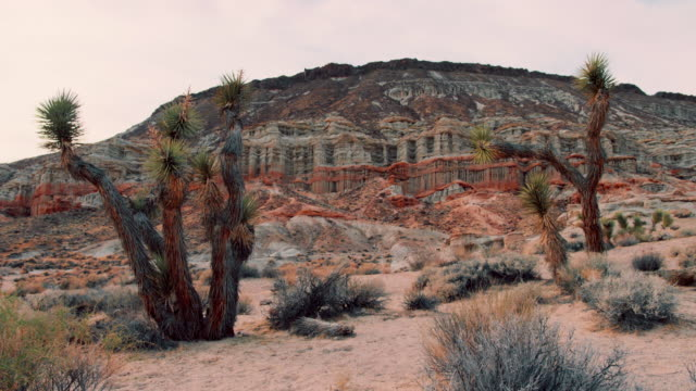 pan: desert landscape (shot on red) - cactus stock-videos und b-roll-filmmaterial