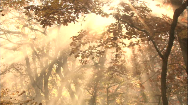 Pan down and zoom out from bright golden sunlight bursting through autumn tree leaves as steam rises from flowing mountain stream