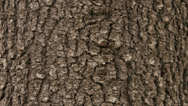 pan down the trunk of a pine tree. - tree trunk stock videos & royalty-free footage