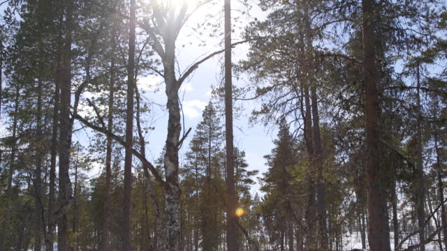 pan down trees in a forest in finland. - finland stock videos & royalty-free footage