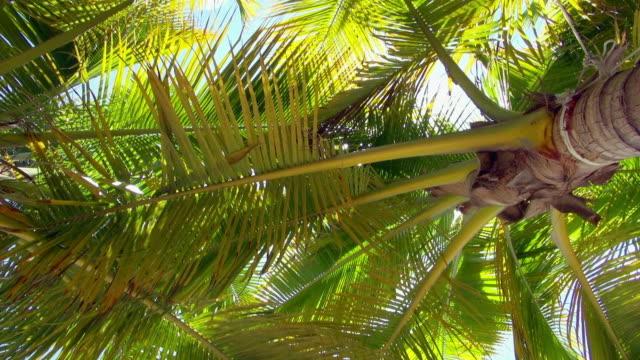 pan downward: trees of sayulita beach of mexico - メキシコ点の映像素材/bロール