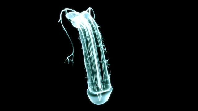 a pan form left to right of an x-ray view of the erection of the penis on a black background. - digital animation stock videos & royalty-free footage