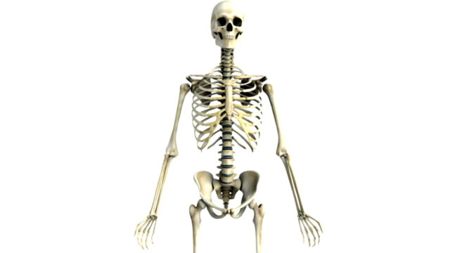 a pan from left to right and then a zoom in on the skeleton to the pelvic region which then pans from right to left. - sacrum stock videos & royalty-free footage