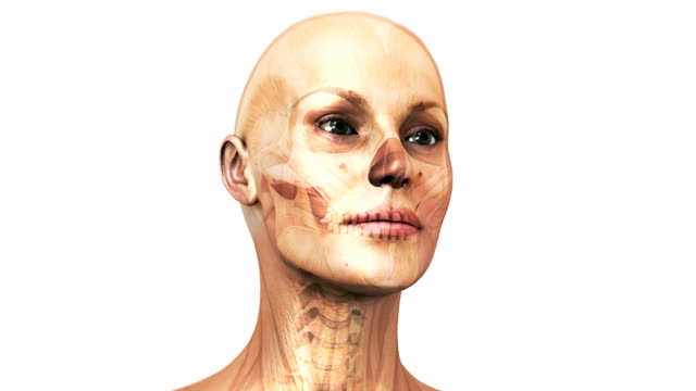 A pan from left to right of a head and shoulders view of a female figure which fades to reveal the skeletal and muscular system within.