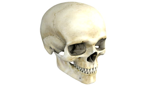 A pan from left to right of the skull. As the camera pans the bones of the skull become colored to emphasize their structure.