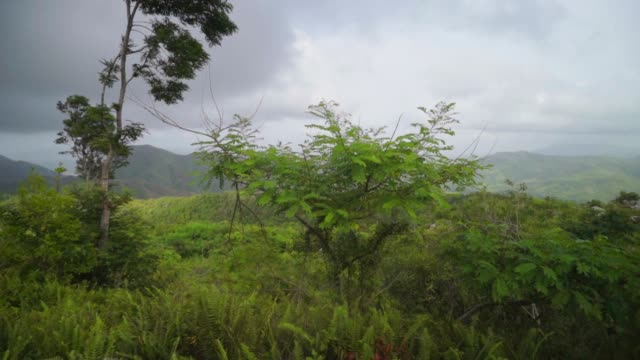 vídeos y material grabado en eventos de stock de pan from storm clouds, to tropical flora, to ancient stone path - hispaniola