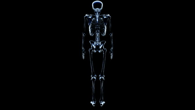 a pan in on a full rotation of the skeleton in x-ray view on black background.  all fades down except the lumbar vertebrae, sacrum and pelvis. - lumbar vertebra stock videos & royalty-free footage