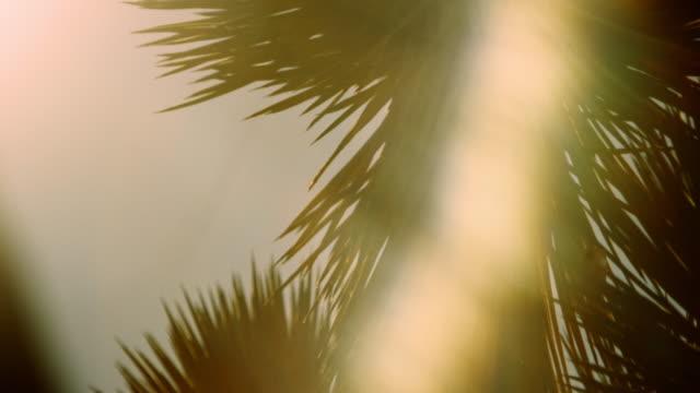 vídeos de stock e filmes b-roll de pan joshua tree head during sunset - folha de palmeira