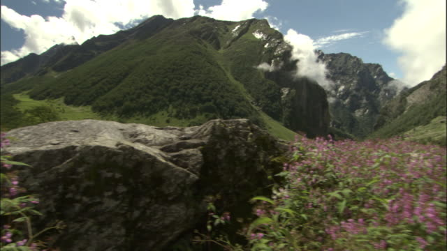 pan left across flowers, valley of flowers, himalayas available in hd. - valley stock videos & royalty-free footage