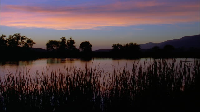 pan left across lake at sunset with silhouetted reeds and trees, california available in hd. - reed grass family stock videos and b-roll footage