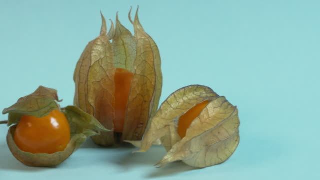 Pan left across, then pan right across, three physalis fruit against a plain blue background.