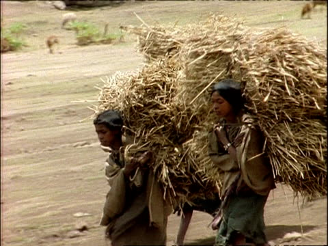 ms pan left, african children carrying haystacks on their backs, downhill, ethiopia, africa - アフリカの角点の映像素材/bロール