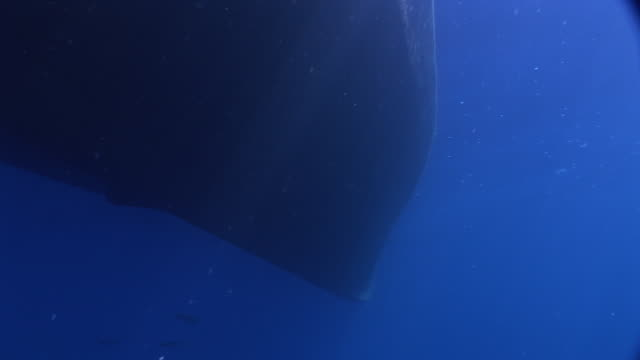 ms pan left along hull of boat to shark cages, underwater view, guadalupe island, pacific ocean - rumpf stock-videos und b-roll-filmmaterial