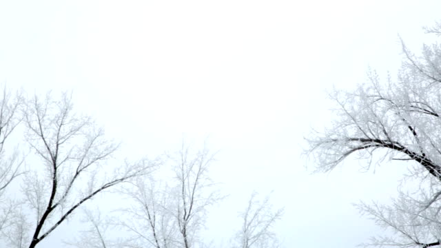 vidéos et rushes de pan left and right of silhouette of frost covered bare trees against gray winter sky. - bare tree