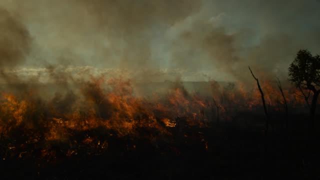 pan left as black smoke rises from burning cerrado grassland. - cerrado stock videos & royalty-free footage