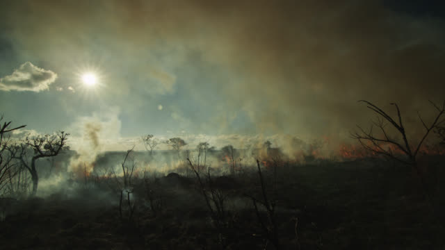 pan left as black smoke rises from burning cerrado grassland. - smoke physical structure stock videos & royalty-free footage