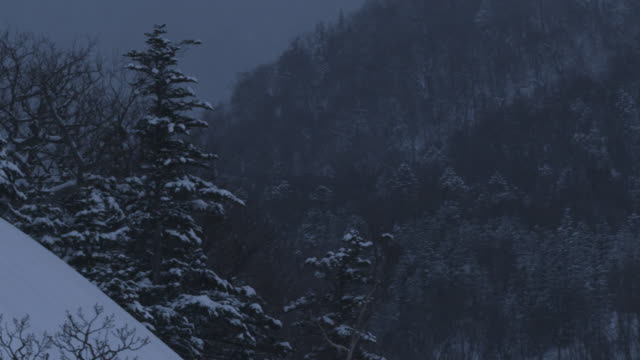 pan left as snow falls on forested hillside. - satoyama scenery stock videos & royalty-free footage