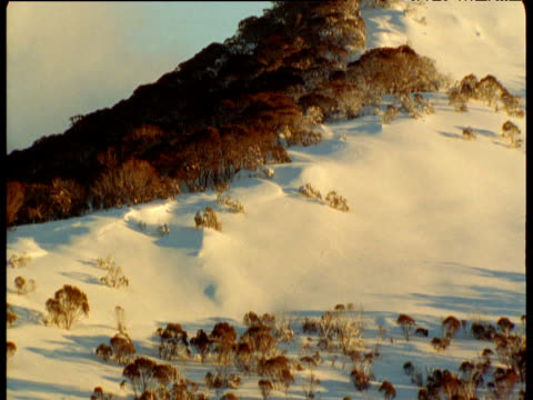 Pan left as snow lies on wooded Australian Alps, New South Wales, Australia